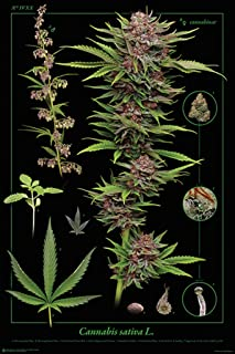 product image for Frame USA Cannabis Anatomy Poster Print (24x36) (Rolled)