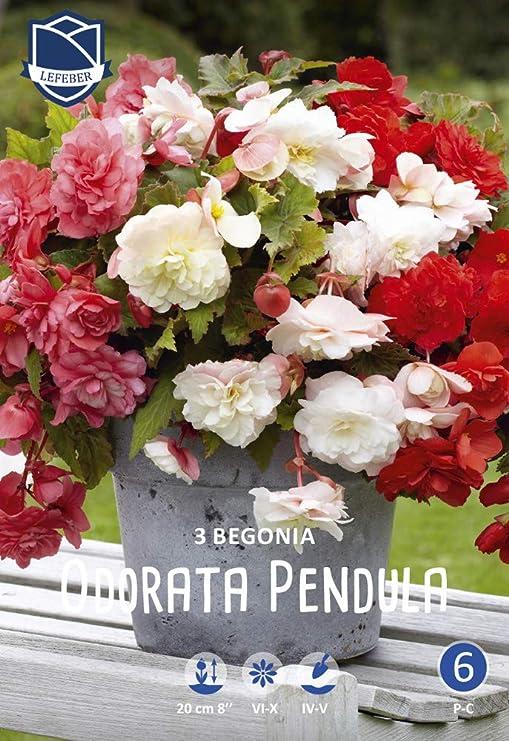 Vaso Di Fiore Succulente Fioriera Gallo Bonsai Arredamento Giardino Legno