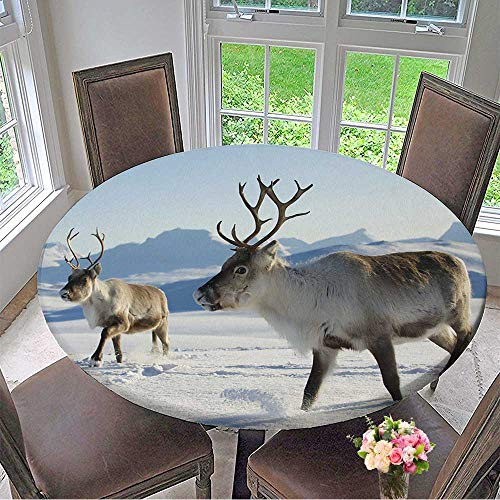 Mikihome Round Tablecloth Reindeers in Natural Environment,Tromso Region,Northern Norway. for Kitchen 50