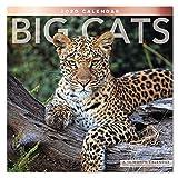 2020 Big Cats Wall Calendar (LME3471020)