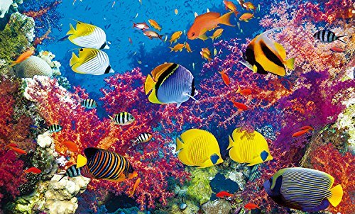Coloreluxe 500 Piece Puzzle - Coral Fish Paradise by George