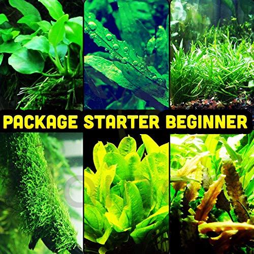 Mainam 30+ Stems Package Starter Beginner Set Live Aquarium Plants Java Moss, Micro Sword, Rosette Amazon Sword, Anubias, Java Fern and More