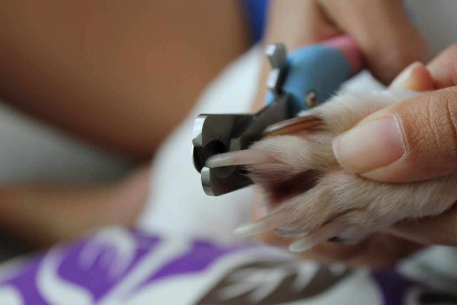 Amazon Dog Nail Clippers Get The Best Pet Nail Trimmers For