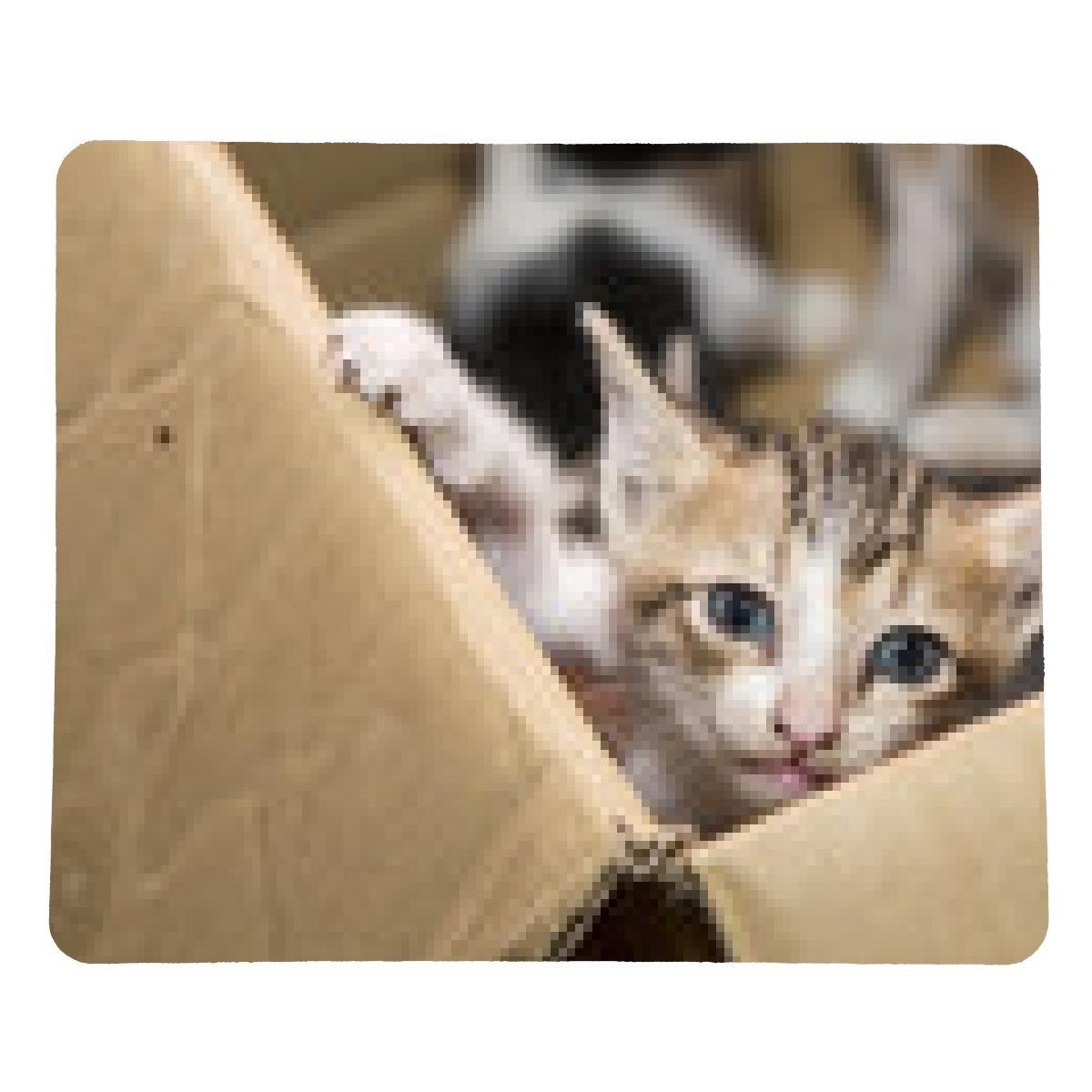 alfombrilla de ratón Gato que se sienta en una caja de cartón: Amazon.es: Electrónica
