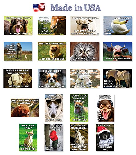 FUNNY DOGS AND OTHER ANIMALS postcard set of 20 postcards. Funny dog and animal quotes post card variety pack. Made in USA.