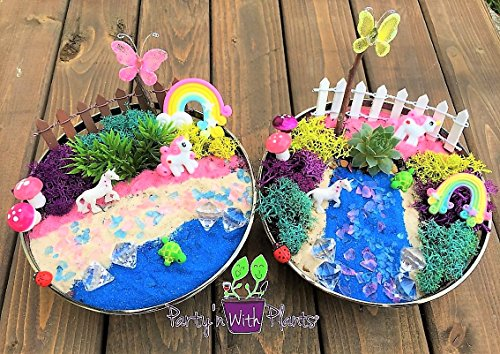 Unicorn Fairy Garden Kit with Succulent from Party'n With Plants