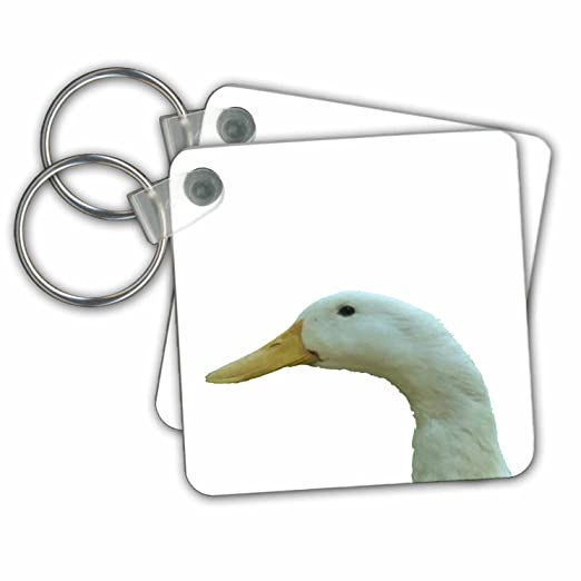 amazon com 3drose taiche vector duck just ducky vector key