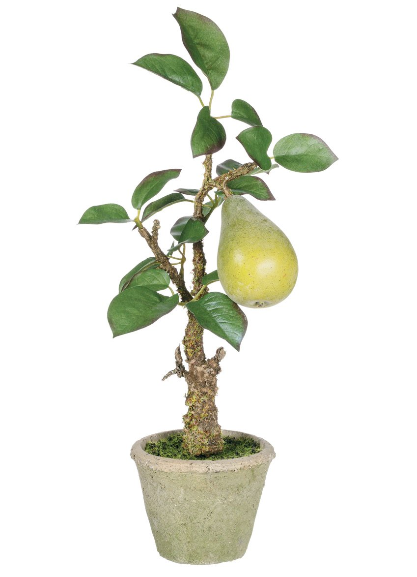 Amazon Sullivans 14 Artificial Potted Pear Tree Home Kitchen
