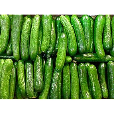 30+ ORGANICALLY GROWN Persian Beit Alpha (A.k.a. Lebanese) Cucumber Seeds Heirloom NON-GMO Crispy Fragrant From USA : Garden & Outdoor