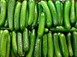buy 30+ ORGANICALLY GROWN Persian Beit Alpha (A.k.a. Lebanese) Cucumber Seeds Heirloom NON-GMO Crispy Fragrant From USA now, new 2018-2017 bestseller, review and Photo, best price $2.65