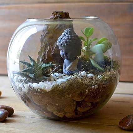 Mybageecha The Pondering Buddha Diy Terrarium Kit Live Plants Wood