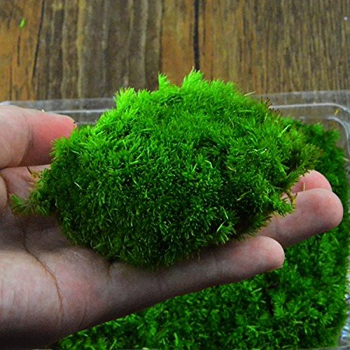 Garden Landscaping & Decking - Diy Mirco Landscape Moss Plant Natural Wild Leucobryum Bowringii Glass Bottle Decorations - Faux Grass Moss Stones Decorating Rocks Micro Ball - Fake For - - Indian Wiki Models