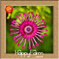 New Arrival!5 Color Available Osteospermum Seeds Potted Flowering Plants Blue Daisy Flower Seeds,50 PCS/Bag,#6G77DA