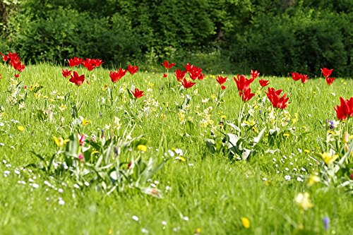 Home Comforts Peel-n-Stick Poster of Green Park Fancy Meadow Floral Tulips Colorful Poster 24x16 Adhesive Sticker Poster Print