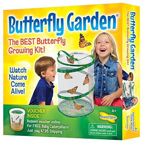 Insect Lore Butterfly Growing Kit Toy   Includes Voucher Coupon For 5 Live Caterpillars To Butterflies