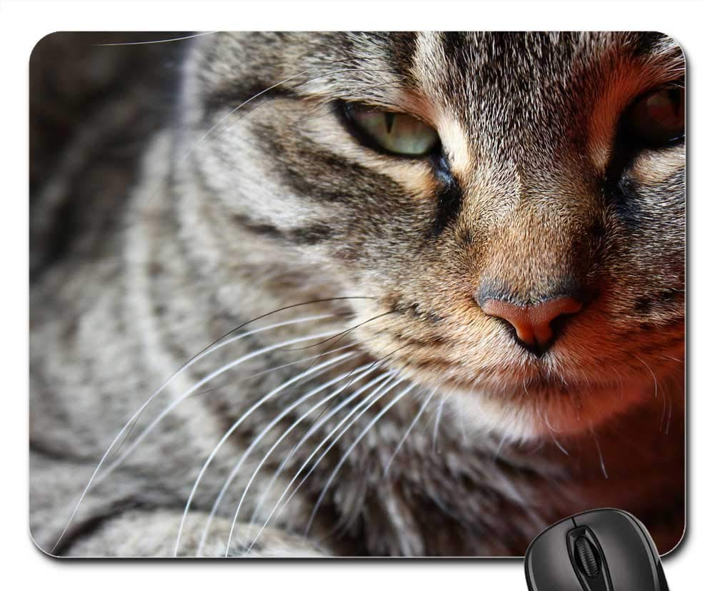 Amazon.com: Mouse Pads - Gata Cat Face Brindle Feline Pet ...