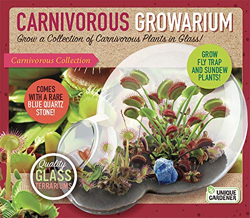 Venus Fly Trap Terrarium - Unique Gardener Grow Your Own Venus Fly Trap - Complete Kids Terrarium Kit to Sprout Fly Trap and Sundew Plants - Includes Everything Needed for The Plants to Thrive