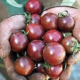 100 Pcs Black Pearl Tomato Seed Balcony Vegetables Bonsai Potted Tomato Plant Seeds