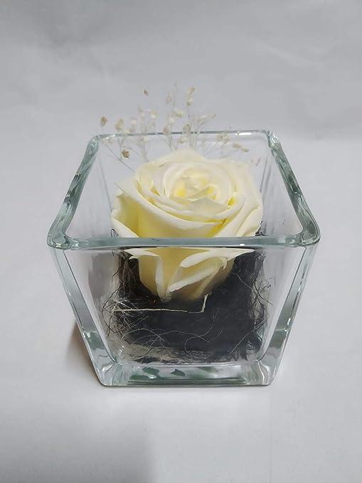 Rosa eterna Blanca. Gratis TU ENVÍO. Rosa eterna Blanca en Cristal ...