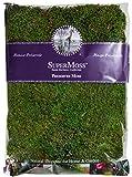 Super Moss 21513 Preserved Sheet Moss, Fresh Green, 16-Ounce