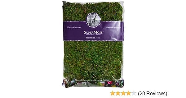 Fresh Green 16-Ounce Super Moss 21513 Preserved Sheet Moss