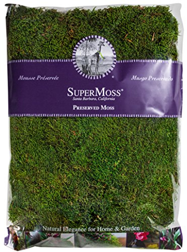 Super Moss 21513 Preserved Sheet Moss, Fresh Green, 16-Ounce (Preserved Greens)