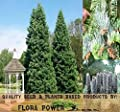WHITE FIR Seed - Concolor Fir, Abies concolor Seed - Wood is a perfect combination of strength, versatility and beauty - Zones 4 and UP - Tree Seeds from Flora Power by Red Pine, Inc.