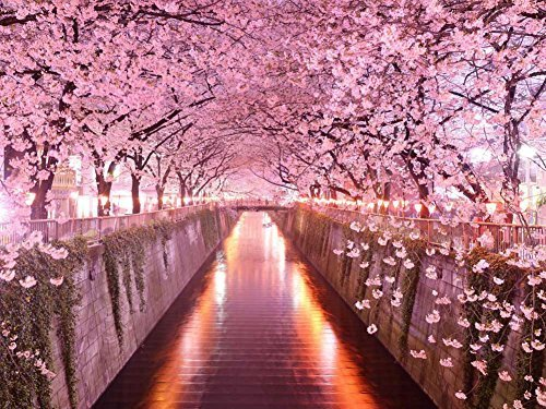Cherry Blossom Tunnel - Oil Painting On Canvas Modern Wall Art Pictures For Home Decoration Wooden Framed (24X36 Inch, Framed) (Painting Blossom)