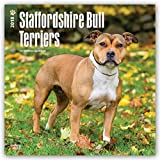 Staffordshire Bull Terriers 2018 12 x 12 Inch Monthly Square Wall Calendar, Animals Dog Breeds (Multilingual Edition)