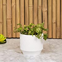 Home Centre Madison-Mackenzie Textured Round Planter - White
