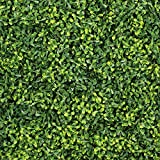 ULAND Artificial Hedges Panels, Outdoor Greenery Ivy Privacy Fence Screening, Home Garden Wedding Decoration, 4pcs 10''x10''