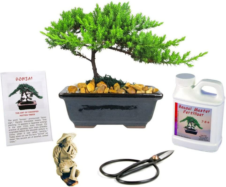 Eve's Japanese Juniper Bonsai Tree Gift Kit, 6 Years Old Japanese Juniper, Complete Bonsai Gift Kit Includes Fertilizer, Figurine, and Clippers, Beautifully Gift Wrapped, Outdoor Bonsai