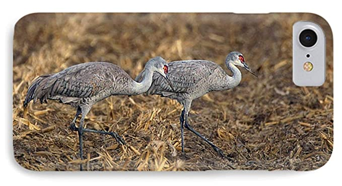Amazon IPhone 7 Slim Case Sandhill Cranes
