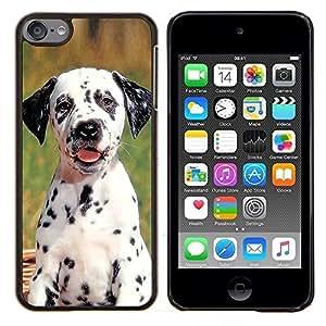 EJOOY---Cubierta de la caja de protección para la piel dura ** Apple iPod Touch 6 6th Touch6 ** --Cachorro dálmata Spots perro de mascota