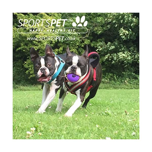 SPORTSPET High Bounce Rubber Dog Balls 3 pack 4