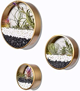 Ecosides Pack of 3 Gold Round Hanging Wall Vase Planter for Succulents or Herbs - Beautiful Wall Decor for Air Plants, Faux Plants, Cacti and More