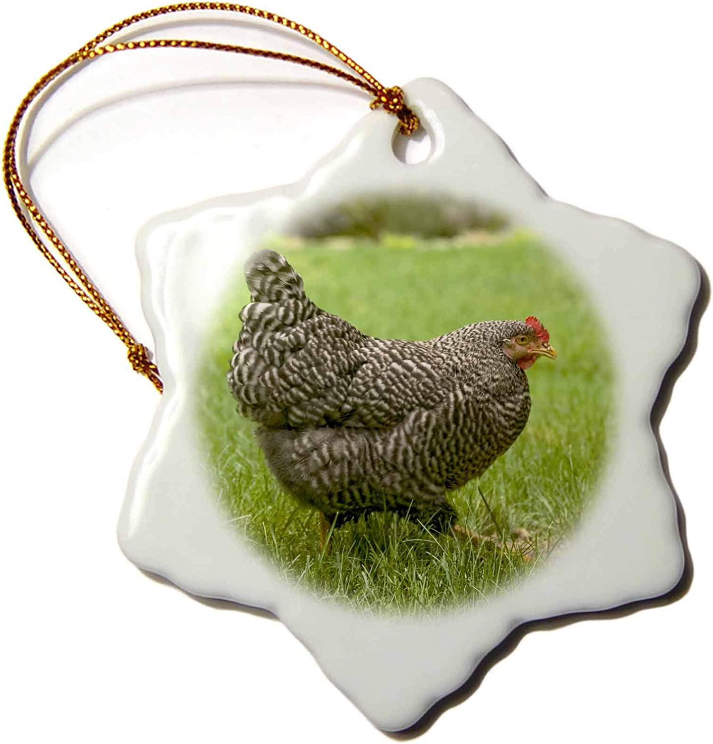 3dRose Free-ranging Barred Plymouth Rock Chicken - Ornaments (ORN_332721_1)