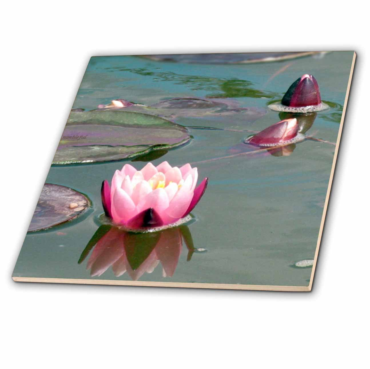 8-Inch 3dRose ct/_112969/_7 Pink Water Lily-Pretty Waterlily Aquatic Flower Photography-Pond Flowers Buds Lilypad-Lilypads-Glass Tile