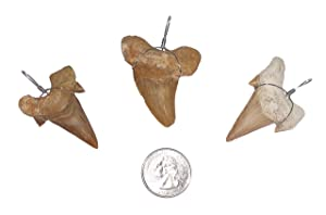 3 Large Wire Wrapped Fossilized Shark Teeth for Necklace