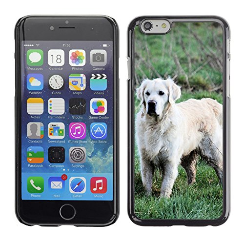 "Bild Hart Handy Schwarz Schutz Case Cover Schale Etui // M00135701 Retriever Hundeartige Haustier Hund // Apple iPhone 6 PLUS 5.5"""