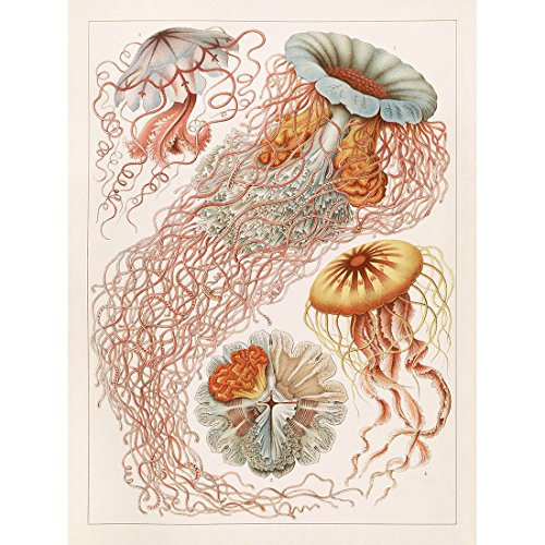 Meishe Art Poster Print Vintage Jellyfish Sea Creatures Colorful Ocean Pink Jelly Fish Marine Life Illustration Home Wall Decor -