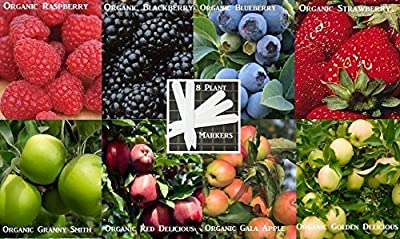 8 Fruit Seeds Combo Pack (Organic) 540+ Seeds 646263362990 Self Fertile + 8 Free Plant Markers Red Delicious Apple Gala Apple Blackberry Raspberry Grape Strawberry & More