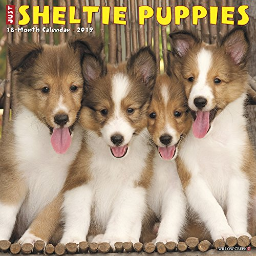 Sheltie Puppies 2019 Wall Calendar (Dog Breed Calendar)