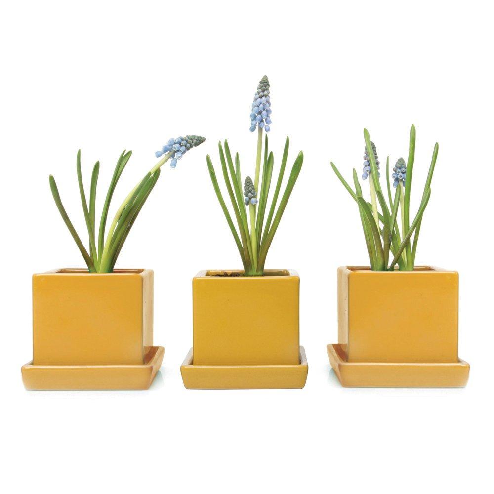 Chive – 3 Piece Set Yellow Square Succulent Cactus Planter Pot, 3 Inch Ceramic Flower Plant Container, Drainage Hole Saucer, Mini Pot Indoor Outdoor Garden