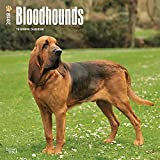 Bloodhounds 2018 12 x 12 Inch Monthly Square Wall Calendar, Animals Dog Breeds Hound (English, French and Spanish Edition)