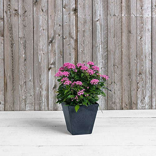 Artstone Ella Square Planter, Black, 10-Inch by Novelty