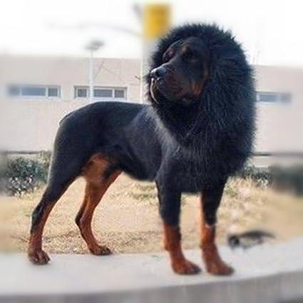 Color Lion Mane For Dog Pet Costume