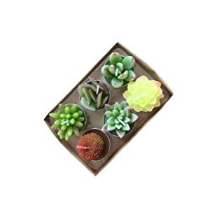 YanSheng 6pcs Succulent Cactus Tealight Candles for Birthday Party Wedding Spa Home Decoration Gifts