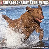 Just Chesapeake Bay Retrievers 2021 Wall Calendar (Dog Breed Calendar)