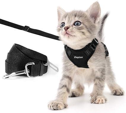 Amazon.com: Eagloo - Juego de arnés y correa para gato, a ...